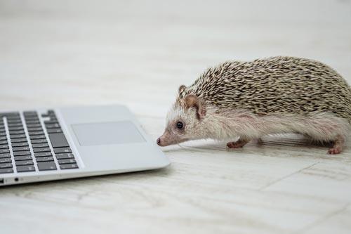 タイピングが遅くてブログが書けない人はどうすればよいのか?